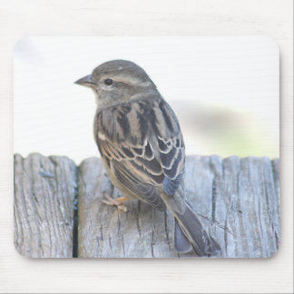 Sparrow photo mouse pad