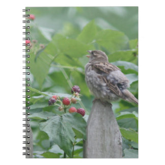 Sparrow photography notebook