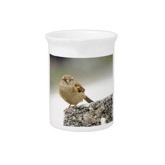 Sparrow portrait pitchers