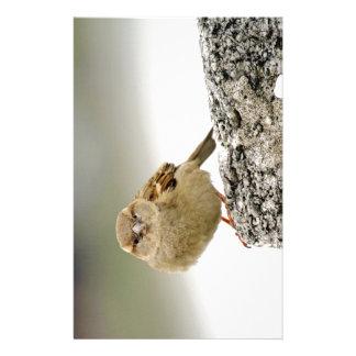 Sparrow portrait stationery