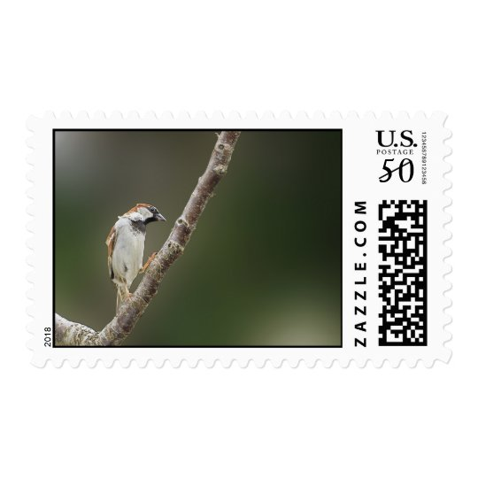 Sparrow Postage