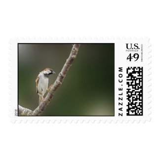 Sparrow Postage Stamp