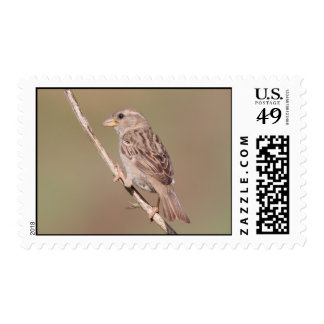 Sparrow Postage Stamps