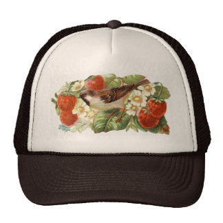 Sparrow & Red Strawberries - Vintage Illustration Hats