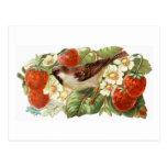 Sparrow & Red Strawberries - Vintage Illustration Post Card