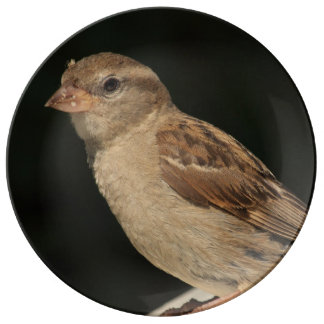 sparrow sitting on a bench porcelain plates