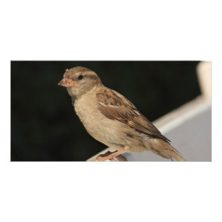 sparrow sitting on a bench picture card
