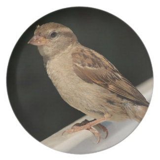 sparrow sitting on a bench party plate