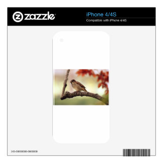 sparrow skins for iPhone 4S