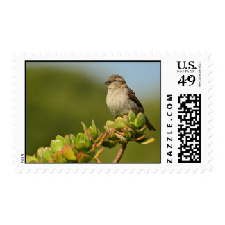 Sparrow Song Stamp
