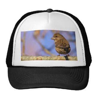 Sparrow Trucker Hats