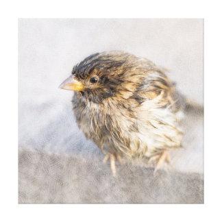 Sparrow - Weather Forecast Epic Fail Canvas Print