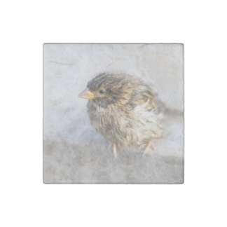 Sparrow - Weather Forecast Epic Fail Stone Magnet