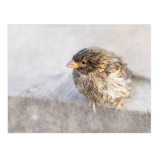 Sparrow - Weather Forecast Epic Fail Postcard