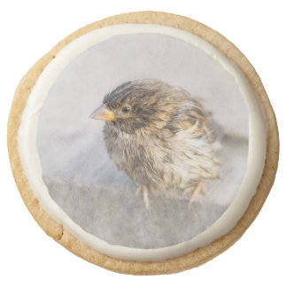Sparrow - Weather Forecast Epic Fail Round Shortbread Cookie