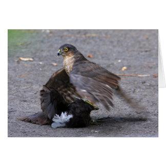 Sparrowhawk and Dinner Card