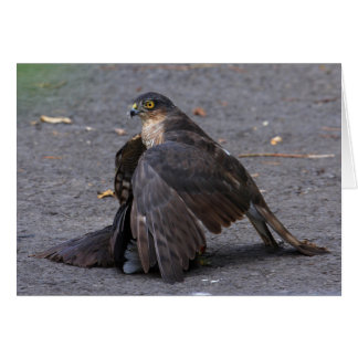 Sparrowhawk and Prey Card
