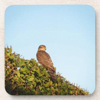 Sparrowhawk Coasters