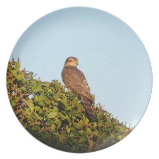 Sparrowhawk Dinner Plate