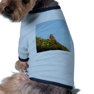 Sparrowhawk Dog Shirt