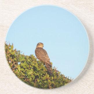 Sparrowhawk Drink Coaster