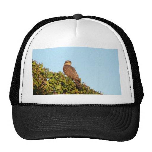 Sparrowhawk Gorras De Camionero