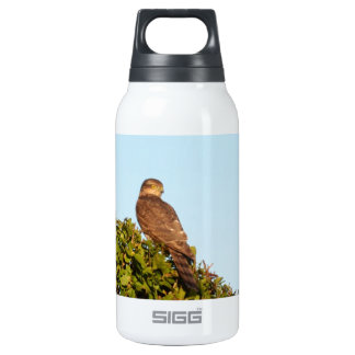 Sparrowhawk Insulated Water Bottle