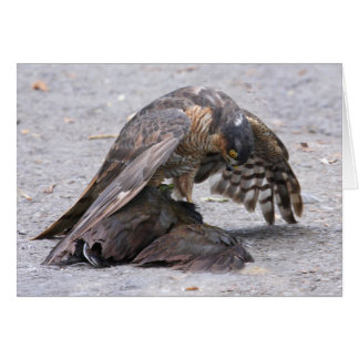Sparrowhawk Protecting Card