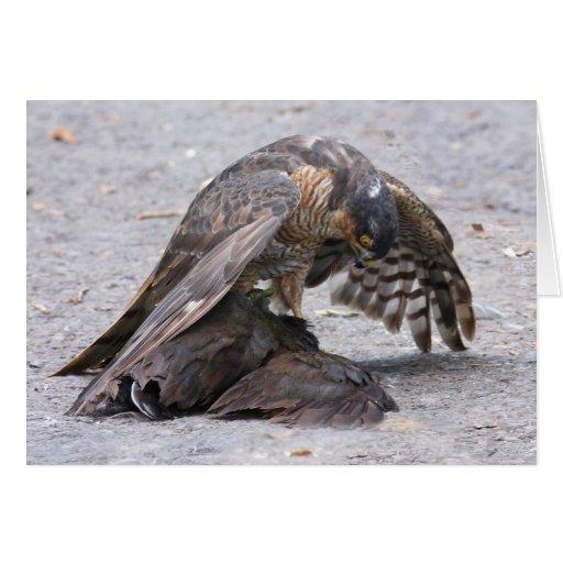 Sparrowhawk Protecting Greeting Card
