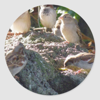 Sparrows Classic Round Sticker