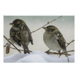 Sparrows In Winter Print