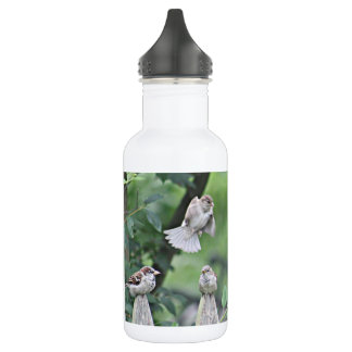Sparrows on fence photo stainless steel water bottle