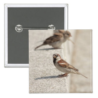 sparrows on the step 2 inch square button