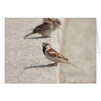 sparrows on the step card