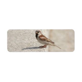 sparrows on the step label