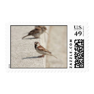 sparrows on the step postage