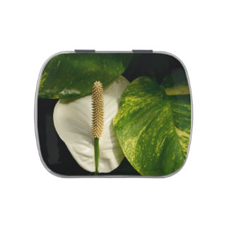 Spath Lily Candy Tin