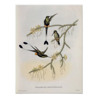 Spathura Solstitialis Póster