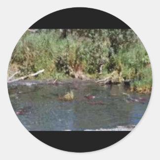 Spawning Salmon Classic Round Sticker