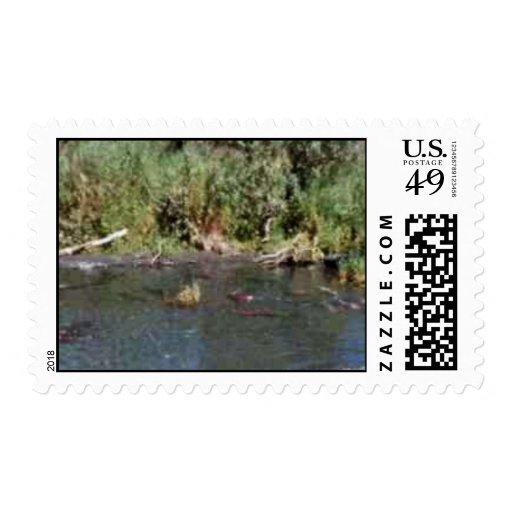 Spawning Salmon Stamp