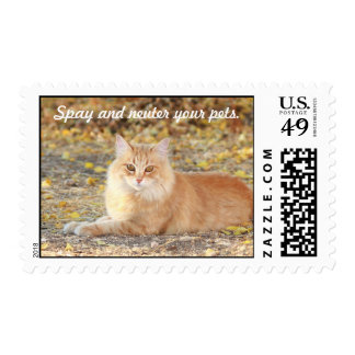 Spay and Neuter Postage
