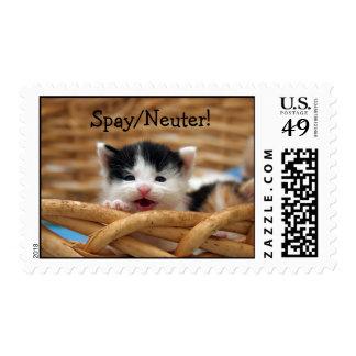 Spay/los sellos del neutro