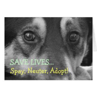Spay Neuter Adopt Pet Dog Rescue Foster Card