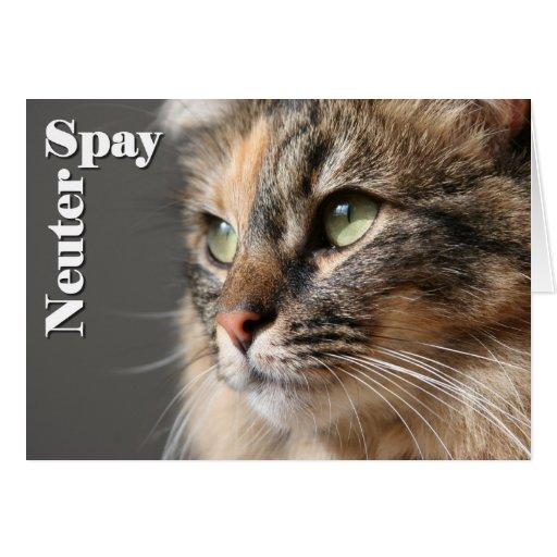 Spay / Neuter Cards