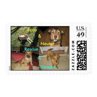 Spay, Neuter, Rescue, Donate Postage
