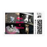 Spay Neuter Rescue Stamp