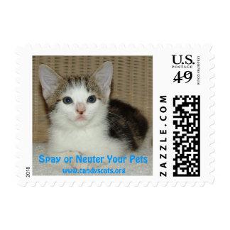 Spay o neutralice su sello de los mascotas 4