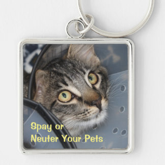 Spay or Neuter Cute Kitten Keychain