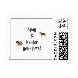 Spay y neutralice a sus mascotas (las imágenes)