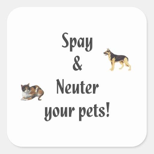 Spay y neutralice a sus mascotas (las imágenes) pegatina cuadrada